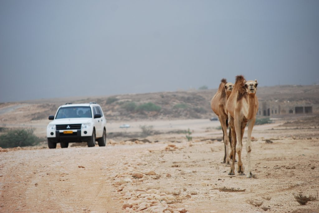 Mitsubishi car and camels